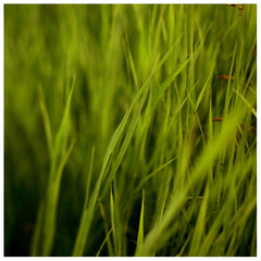 Greener #2 -  Fine Art Photograph