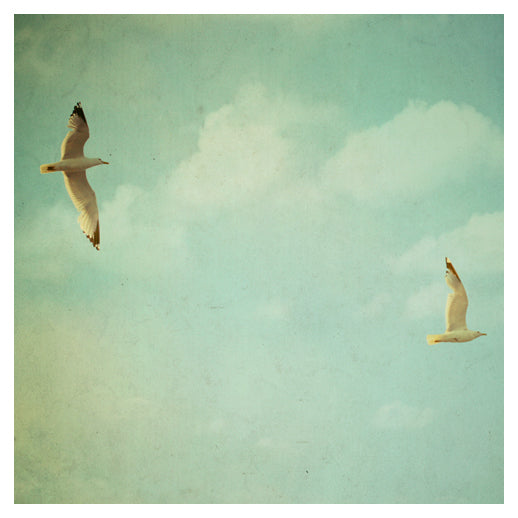 Fly Free - Fine Art Photograph