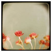 Little Garden - Fine Art Photograph