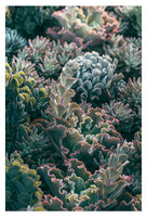 Mornings In The Succulent Garden #1 - Fine Art Photograph