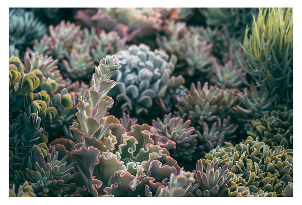 Mornings In The Succulent Garden #2 - Fine Art Photograph