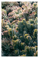Mornings In The Succulent Garden #3 - Fine Art Photograph