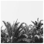 Palm Breeze - Fine Art Photograph