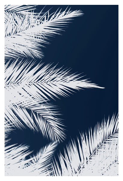 Palm Cyanotype #1 -  Fine Art Photograph