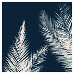 Palm Cyanotype #2 -  Fine Art Photograph