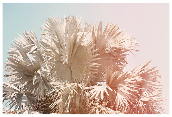 Pastel Palms - Fine Art Photograph