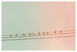 Sparrow Row - Fine Art Photograph