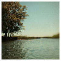 Willow #1 - Fine Art Photograph