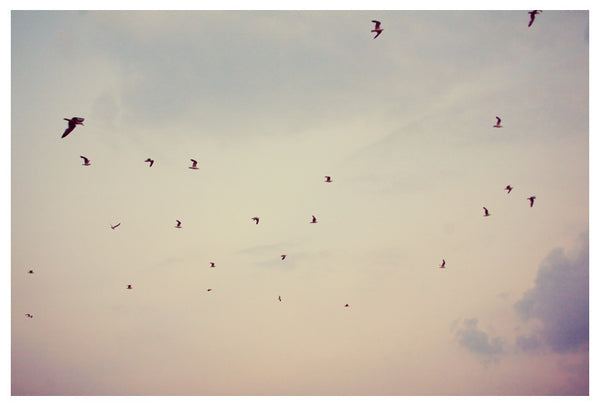 Sea birds soar against a summer sunset. Photographed by Alicia Bock.