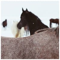 Winter Horse - Fine Art Photograph