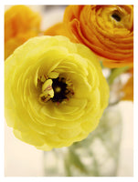 Yellow Sunshine #2 - Fine Art Photograph