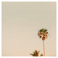 Minimal Palms -  Fine Art Photograph