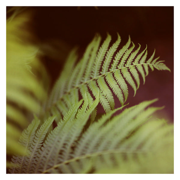 Fern #2 - Fine Art Photograph