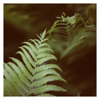 Fern #6 - Fine Art Photograph