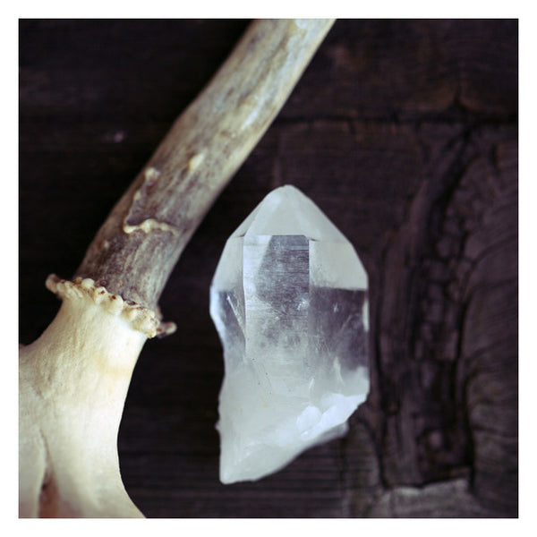 Ice and Bone - Fine Art Photograph