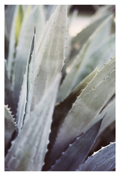 Winter Agave #2 -  Fine Art Photograph