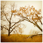 Autumn Gold - Fine Art Photograph