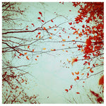 Autumn's Reach - Fine Art Photograph