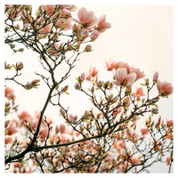Bloom and Bud - Fine Art Photograph