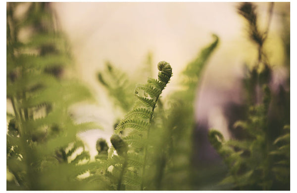 Delicate ferns, photographed by Alicia Bock.