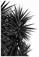 Black and White Cactus Study #1 -  Fine Art Photograph