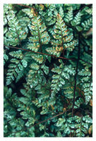 Deep Green Fern #1 - Fine Art Photograph
