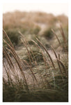 Dune Grass At Dusk - Fine Art Photograph