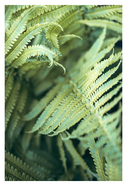 Fern Valley #1 - Fine Art Photograph