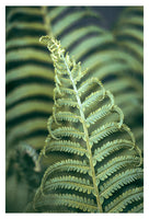 Fern Valley #2 - Fine Art Photograph