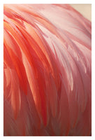 Flamingo #12 - Fine Art Photograph