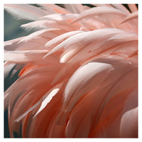 Flamingo #1 - Fine Art Photograph