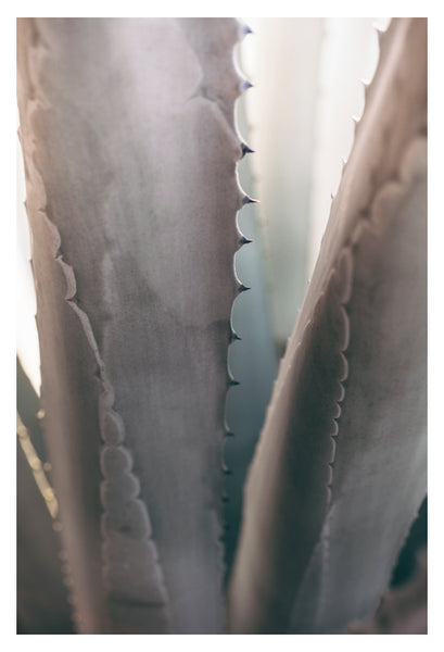 Gray Agave #2 -  Fine Art Photograph