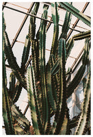 Greenhouse Cactus - Fine Art Photograph