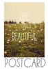 Life is Beautiful (Dandelion) - Postcards