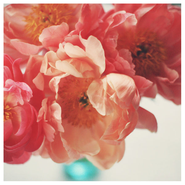 Paeonia #5 -  Fine Art Photograph