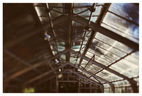 Greenhouse #2 - Fine Art Photograph