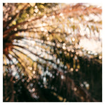 Palm Abstract #1 - Fine Art Photograph