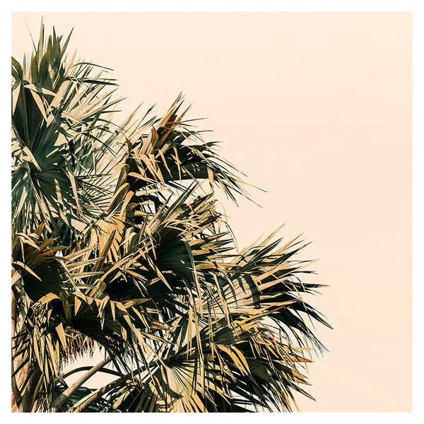 Palm Morning -  Fine Art Photograph