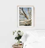 Seashells and Driftwood - Fine Art Photograph