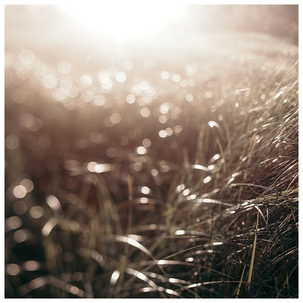 September Beachgrass #2 - Fine Art Photograph