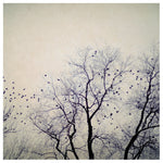 Flight Pattern - Fine Art Photograph