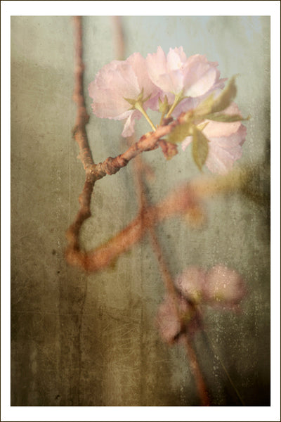Becoming Spring - Fine Art Photograph