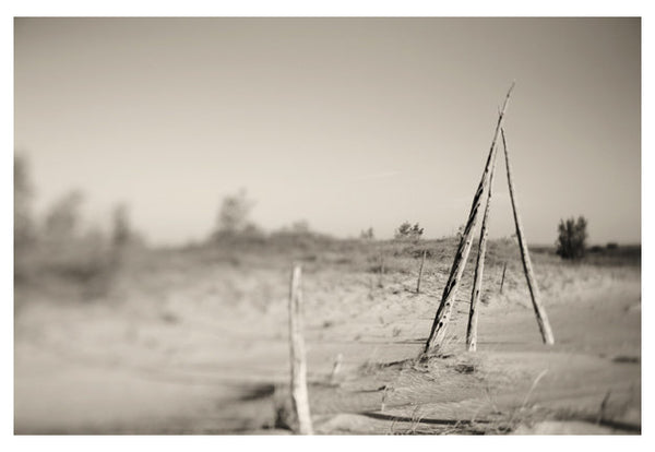 Ghost Forest #5 - Fine Art Photograph