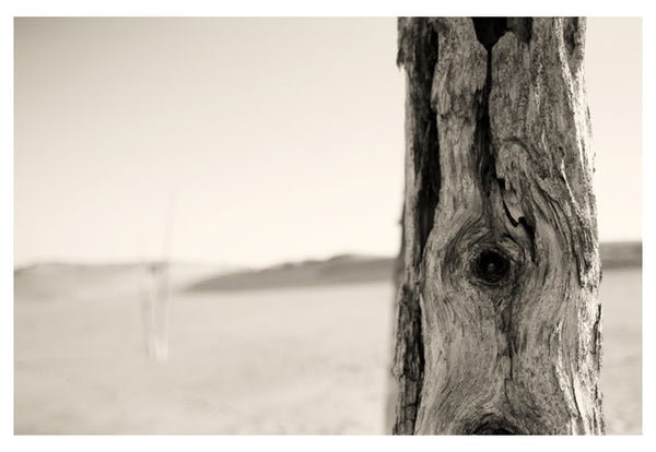 Ghost Forest #1 - Fine Art Photograph