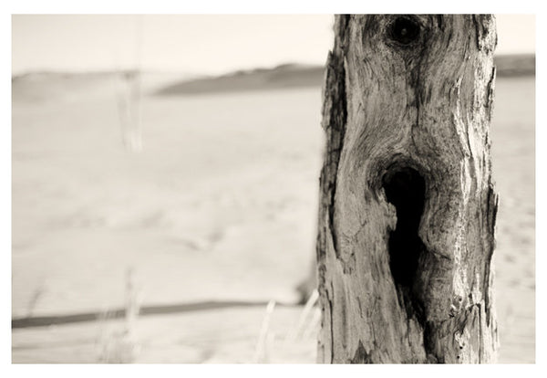Ghost Forest #2 - Fine Art Photograph