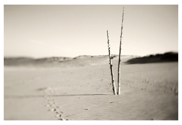 Ghost Forest #3 - Fine Art Photograph