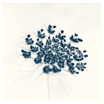 The Blue Queen #1 -  Fine Art Photograph