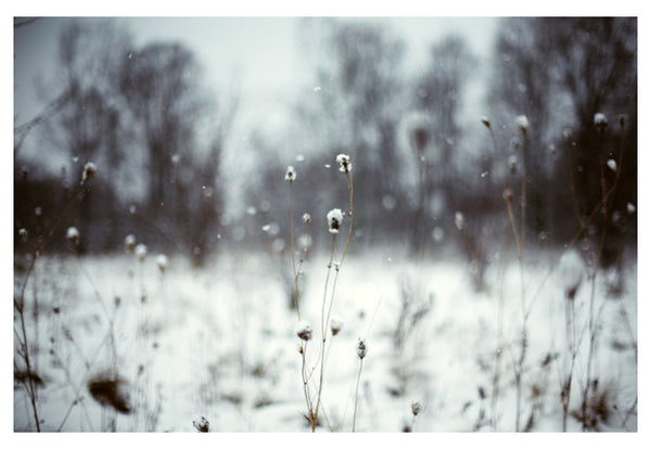The lightness of winter. Photographed by Alicia Bock.
