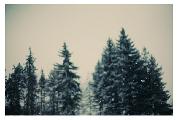 Winter Fancy -  Fine Art Photograph
