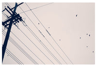 Crossing Crows - Fine Art Photograph